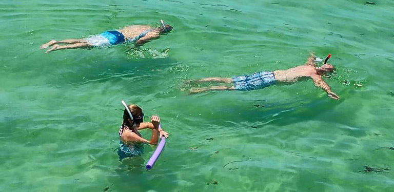 Dolphin Snorkeling Cruise Boat Tours St Petersburg Florida
